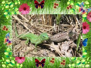 На лугу можно встретить жаб , ящериц Они питаются насекомыми
