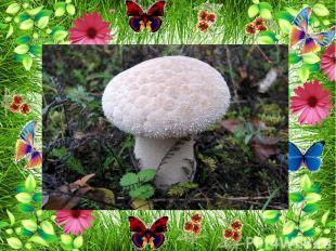 Растут на лугах и грибы :
