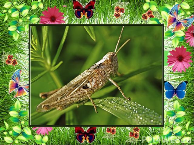 На лугу множество различных насекомых