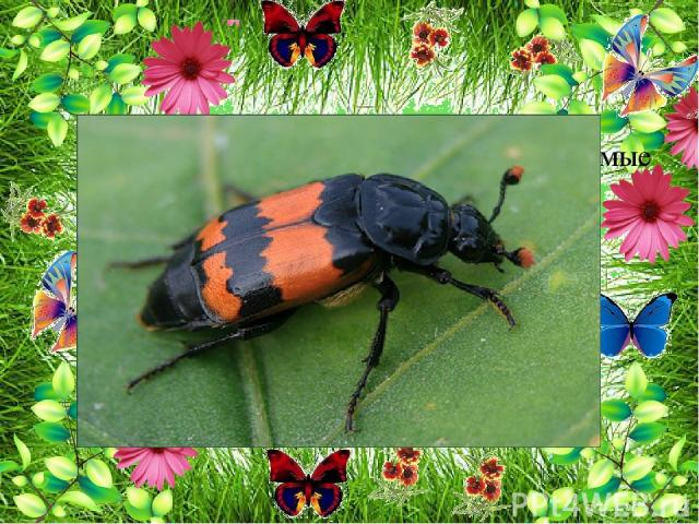 Есть на лугу очень интересные насекомые - санитары