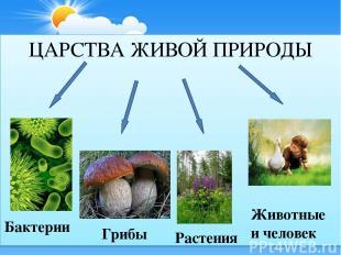 ЦАРСТВА ЖИВОЙ ПРИРОДЫ Бактерии Грибы Растения Животные и человек