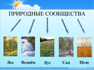 ПРИРОДНЫЕ СООБЩЕСТВА Лес Водоём Луг Поле Сад