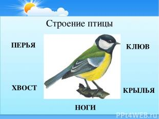 Строение птицы КЛЮВ КРЫЛЬЯ НОГИ ПЕРЬЯ ХВОСТ