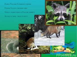 Наша Россия большая страна Очень богата лесами она. Много животных в России живё