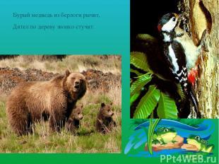 Бурый медведь из берлоги рычит, Дятел по дереву звонко стучит.