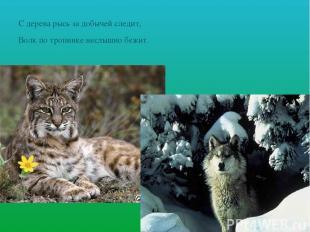С дерева рысь за добычей следит, Волк по тропинке неслышно бежит.