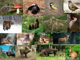 Много в лесах очень разных зверей – Всем места хватит в России моей!