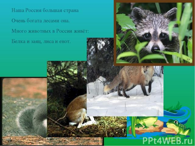 Наша Россия большая страна Очень богата лесами она. Много животных в России живёт: Белка и заяц, лиса и енот.