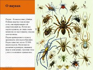 О пауках Пауки - безжалостные убийцы. Поймав жертву в шелковые сети, они впрыски