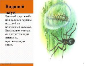 Водяной паук Водяной паук живёт под водой, в паутине, похожей на водолазный коло