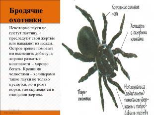 Бродячие охотники Некоторые пауки не плетут паутину, а преследуют свои жертвы ил