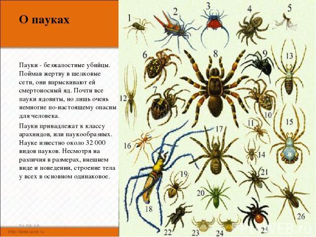 О пауках Пауки - безжалостные убийцы. Поймав жертву в шелковые сети, они впрыскивают ей смертоносный яд. Почти все пауки ядовиты, но лишь очень немногие по-настоящему опасны для человека. Пауки принадлежат к классу арахнидов, или паукообразных. Наук…