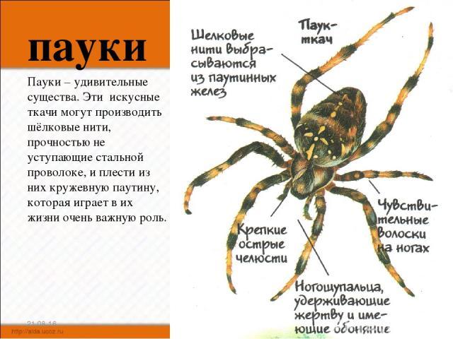 пауки Пауки – удивительные существа. Эти искусные ткачи могут производить шёлковые нити, прочностью не уступающие стальной проволоке, и плести из них кружевную паутину, которая играет в их жизни очень важную роль. * *