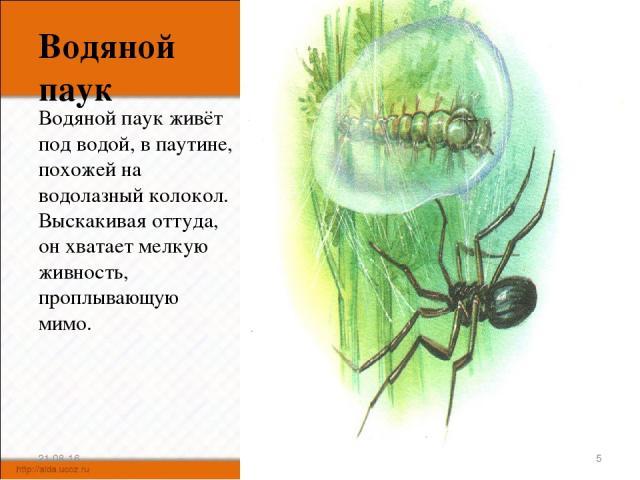 Водяной паук Водяной паук живёт под водой, в паутине, похожей на водолазный колокол. Выскакивая оттуда, он хватает мелкую живность, проплывающую мимо. * *