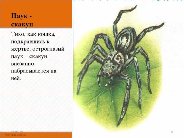 Паук - скакун Тихо, как кошка, подкравшись к жертве, остроглазый паук – скакун внезапно набрасывается на неё. * *