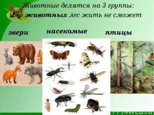 Без животных лес жить не сможет Животные делятся на 3 группы: