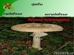 грибы съедобные несъедобные