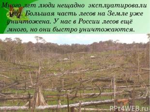 Много лет люди нещадно эксплуатировали леса. Большая часть лесов на Земле уже ун