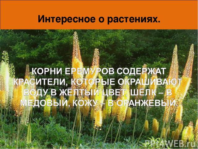 Интересное о растениях. Вот так умеют защитить себя беспомощные, на первый взгляд, растения. А может быть, они не так уж и просты, как мы привыкли считать? Исследования ученых продолжаются, и, возможно, им еще не раз предстоит удивиться. * *
