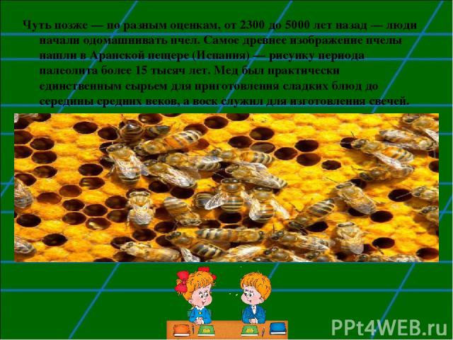 Чуть позже — по разным оценкам, от 2300 до 5000 лет назад — люди начали одомашнивать пчел. Самое древнее изображение пчелы нашли в Аранской пещере (Испания) — рисунку периода палеолита более 15 тысяч лет. Мед был практически единственным сырьем для …