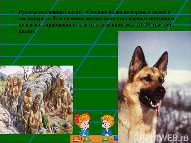 Русская пословица гласит: «Сколько волка не корми, а он всё в лес смотрит». Тем не менее именно волк стал первым спутником человека, «прибившись» к нему в каменном веке (10-15 тыс. лет назад).