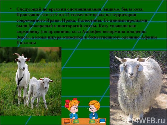 Следующей по времени одомашнивания, видимо, была коза. Произошло это от 9 до 12 тысяч лет назад на территории современного Ирана, Ирака, Палестины. Ее дикими предками были безоаровый и винторогий козлы. Козу уважали как кормилицу (по преданию, коза …