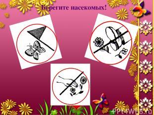 Берегите насекомых!