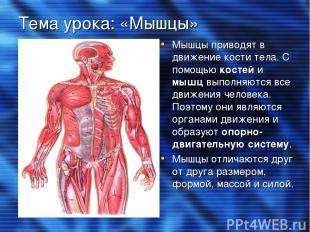 Тема урока: «Мышцы» Мышцы приводят в движение кости тела. С помощью костей и мыш