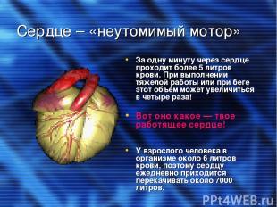 Сердце – «неутомимый мотор» За одну минуту через сердце проходит более 5 литров