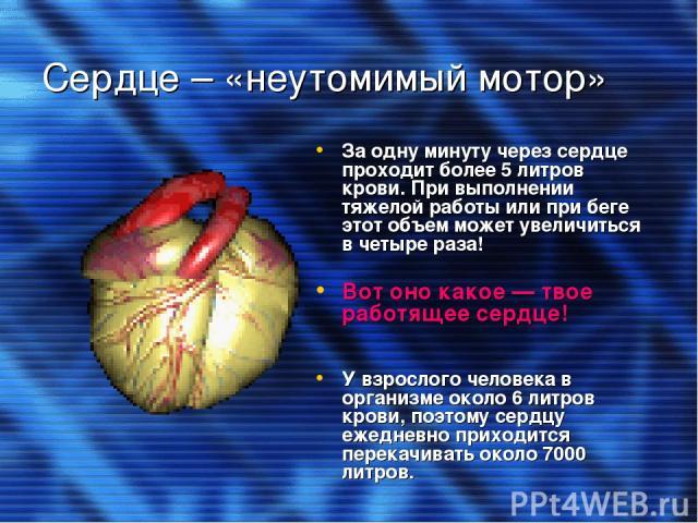 Сердце – «неутомимый мотор» За одну минуту через сердце проходит более 5 литров крови. При выполнении тяжелой работы или при беге этот объем может увеличиться в четыре раза! Вот оно какое — твое работящее сердце! У взрослого человека в организме око…