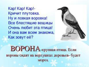 ВОРОНА-крупная птица. Если вороны сидят на верхушках деревьев- будет мороз. Кар!