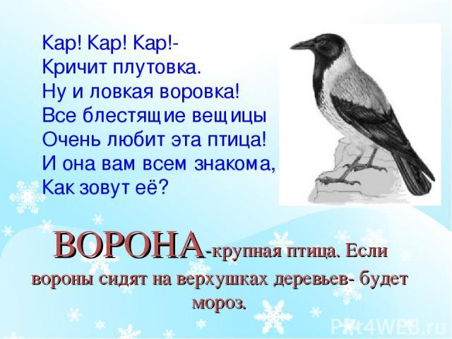 ВОРОНА-крупная птица. Если вороны сидят на верхушках деревьев- будет мороз. Кар! Кар! Кар!- Кричит плутовка. Ну и ловкая воровка! Все блестящие вещицы Очень любит эта птица! И она вам всем знакома, Как зовут её?