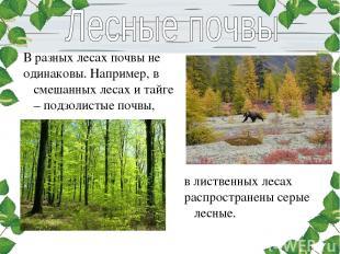 В разных лесах почвы не одинаковы. Например, в смешанных лесах и тайге – подзоли