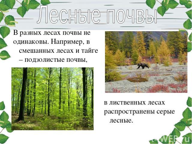 В разных лесах почвы не одинаковы. Например, в смешанных лесах и тайге – подзолистые почвы, в лиственных лесах распространены серые лесные.
