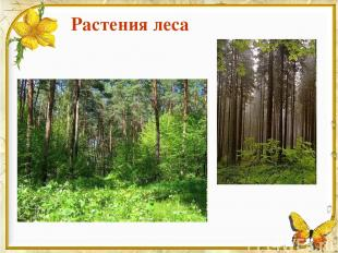 Растения леса