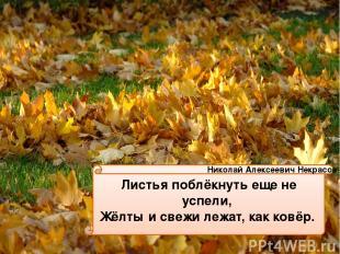 Листья поблёкнуть еще не успели, Жёлты и свежи лежат, как ковёр. Николай Алексее