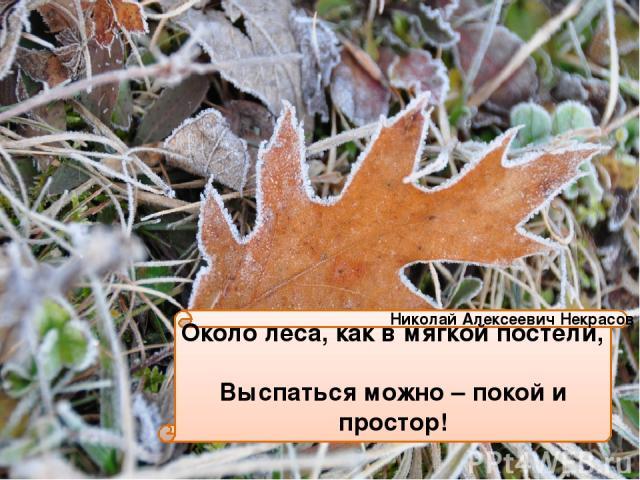 Около леса, как в мягкой постели, Выспаться можно – покой и простор! Николай Алексеевич Некрасов