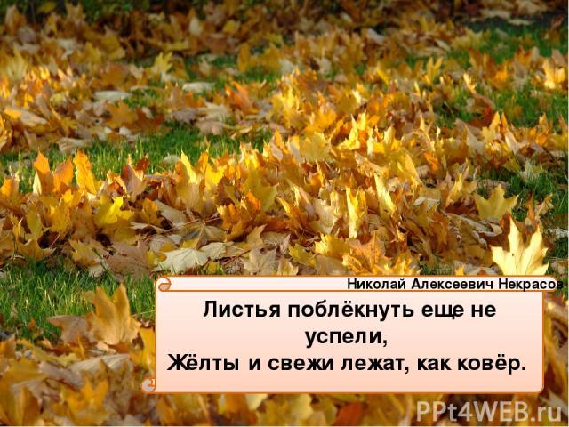 Листья поблёкнуть еще не успели, Жёлты и свежи лежат, как ковёр. Николай Алексеевич Некрасов