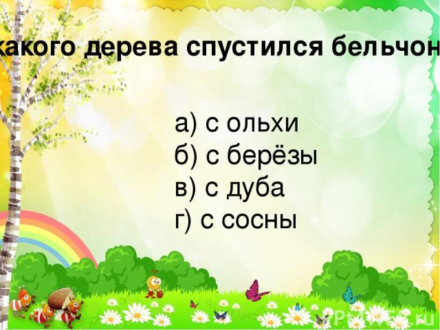 С какого дерева спустился бельчонок? а) с ольхи б) с берёзы в) с дуба г) с сосны