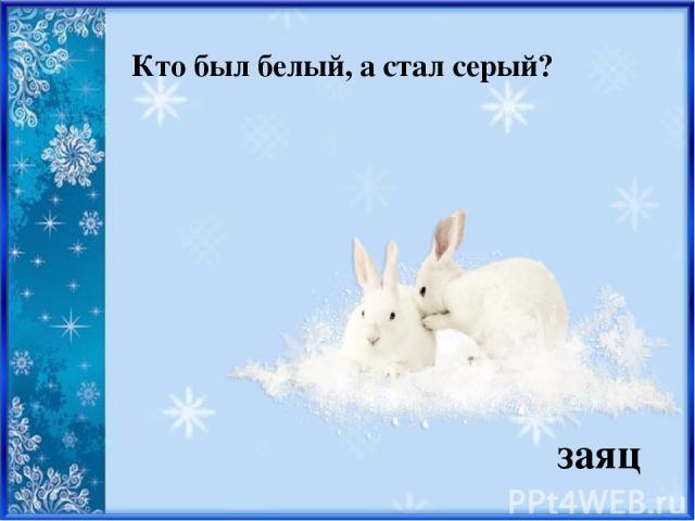 Кто был белый, а стал серый? заяц