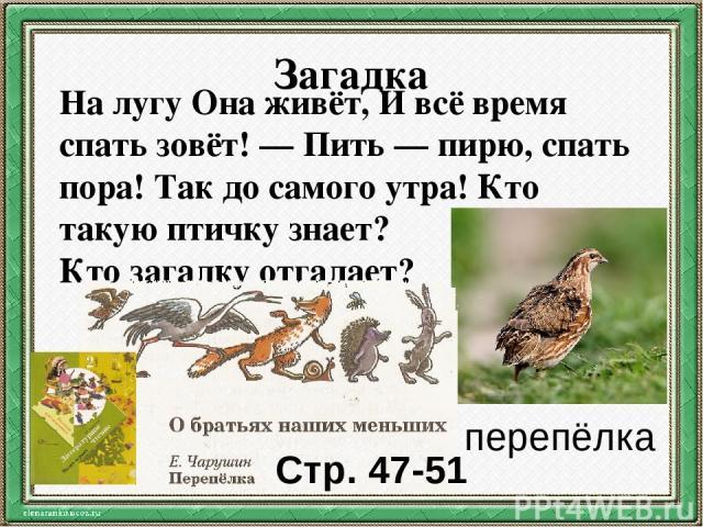 Загадка На лугу Она живёт, И всё время спать зовёт! — Пить — пирю, спать пора! Так до самого утра! Кто такую птичку знает? Ктозагадкуотгадает? перепёлка Стр. 47-51