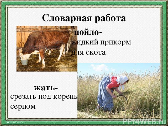 Словарная работа пойло- жидкий прикорм для скота жать- срезать под корень серпом