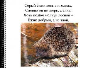 Серый ёжик весь в иголках, Словно он не зверь, а ёлка. Хоть колюч молчун лесной
