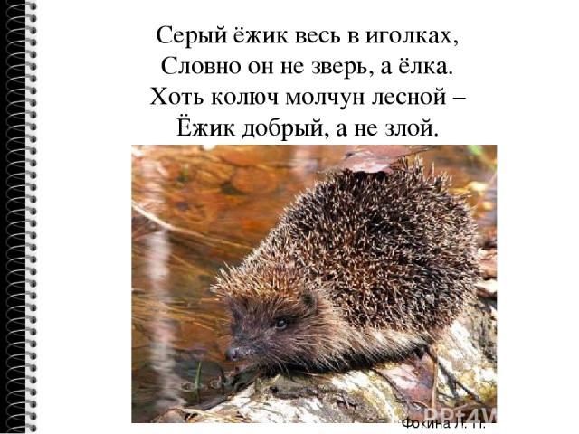 Серый ёжик весь в иголках, Словно он не зверь, а ёлка. Хоть колюч молчун лесной – Ёжик добрый, а не злой. Фокина Л. П.