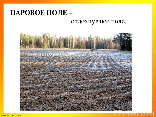 ПАРОВОЕ ПОЛЕ – отдохнувшее поле. © Фокина Лидия Петровна