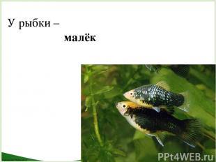 У рыбки – малёк FokinaLida.75@mail.ru