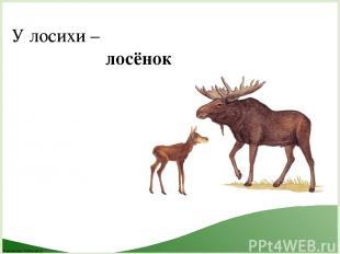 У лосихи – лосёнок FokinaLida.75@mail.ru