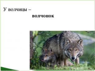 У волчицы – волчонок FokinaLida.75@mail.ru