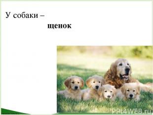 У собаки – щенок FokinaLida.75@mail.ru