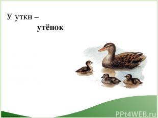 У утки – утёнок FokinaLida.75@mail.ru